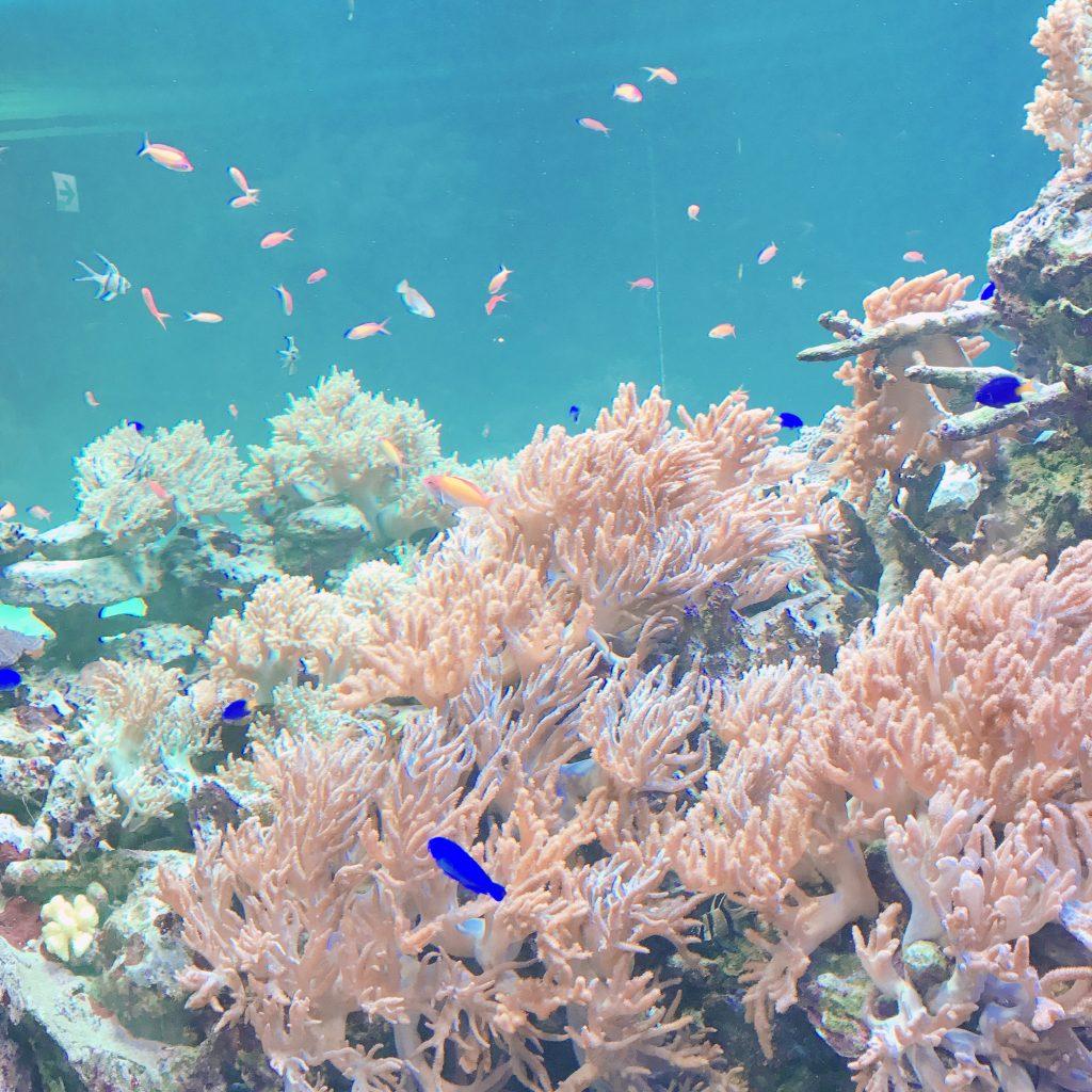 ①サンゴ礁の海